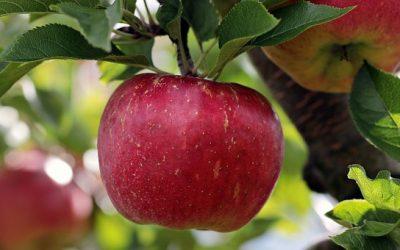 Blagodejno delovanje jabolk
