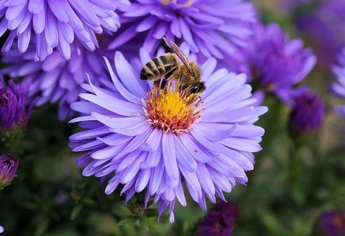 Alergija za pike žuželk (čebele, ose, sršeni)