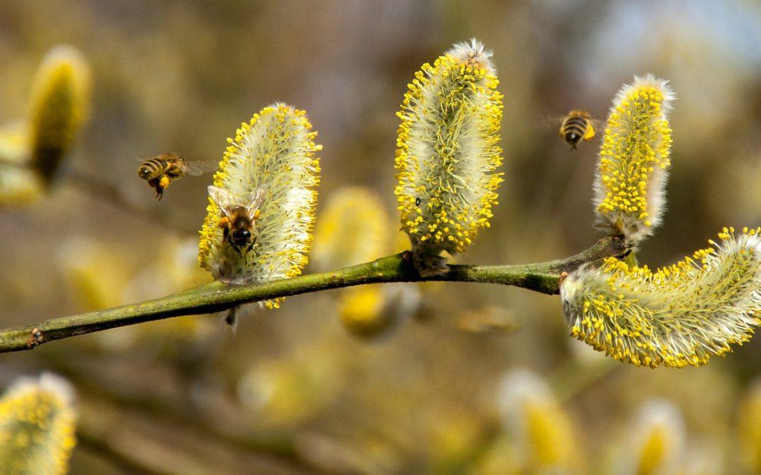 Zaščita kože pri alergiji na cvetni prah