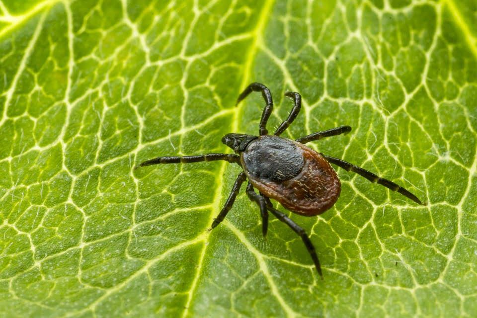 Klop – majhen zajedavec, velike težave